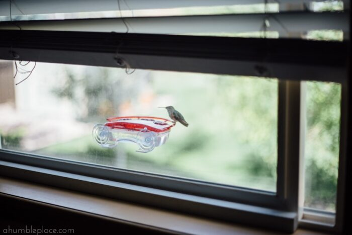 Window Hummingbird Feeder (LOVE) - ahumbleplace.com