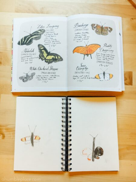 Nature sketchbook! Charlotte Mason-Inspired Kindergarten Curriculum (Year 0.5) - ahumbleplace.com