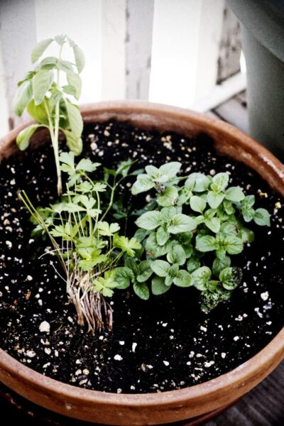 basil, parsley, and oregano.