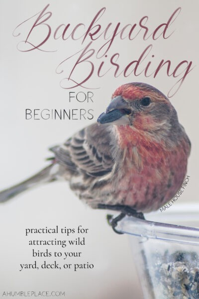 Backyard Birding for Beginners