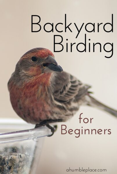 Backyard Birding for Beginners - ahumbleplace.com