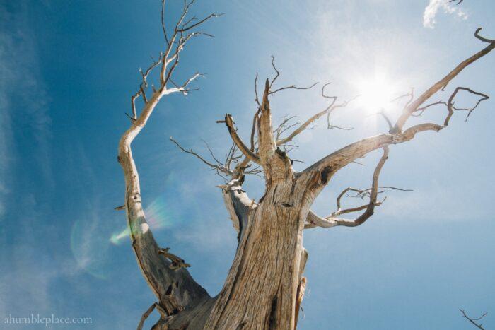 Mesa Verde and Aztec Ruins Junior Ranger Adventures - ahumbleplace.com